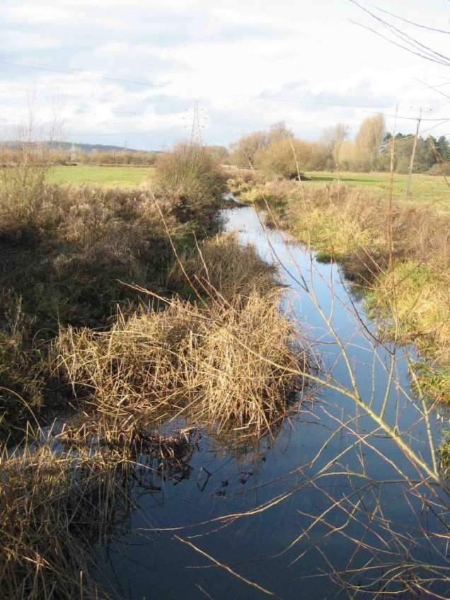 Hinksey Stream, weed building up, clearance will be needed fairly soon - but who will do it??