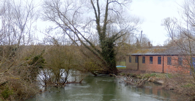 Trees in Weirs Mill Stream Main River between Hertford College Boat House and Long Bridges, Oxford, March 2018